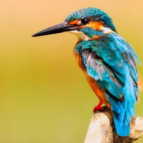 Pájaros Nº 1