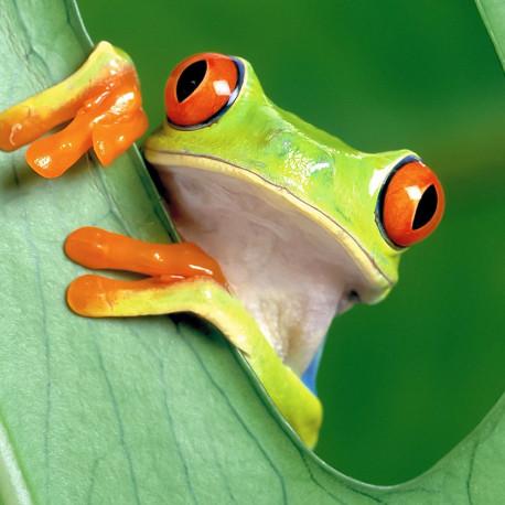Frog Nº 1